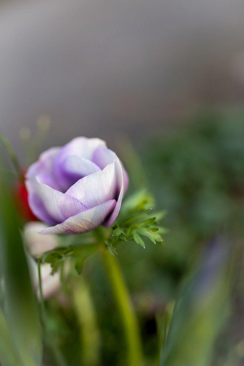 flower, plant, garden